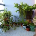 my container plants